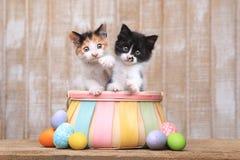 Coppie sveglie i gattini dentro un canestro di Pasqua Fotografia Stock