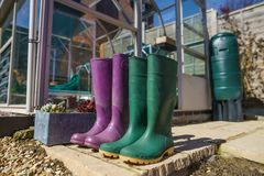 Coppie Wellington Boots porpora e verde fotografie stock