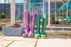 Coppie Wellington Boots porpora e verde fotografie stock libere da diritti
