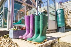 Coppie Wellington Boots porpora e verde fotografia stock libera da diritti