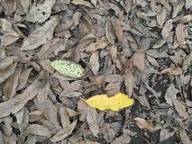 Copre di foglie il fondo e una foglia gialla che evidenzia su  Fotografia Stock