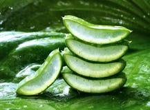 Copre di foglie l'aloe vera con goccia dell'acqua Immagine Stock Libera da Diritti