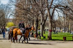 Cops. On horses Royalty Free Stock Image