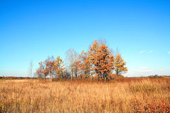 Copse Royalty Free Stock Photos