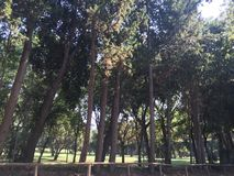 Copse drzewa w parku obraz stock