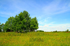 Copse on field Royalty Free Stock Photos