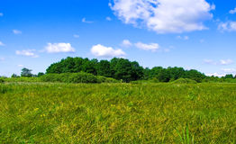 Copse on field Royalty Free Stock Photography