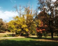 Copse of trees in autumn stock photo
