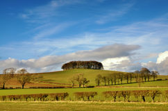 Copse of trees in English Countryside Royalty Free Stock Photography