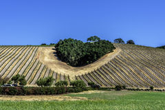 A copse of trees forms a heart shape on the scenic hills. Of the California Central Coast where vineyards grow a variety of fine grapes for wine production stock photo