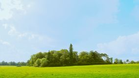 Copse of trees version 1. Version 1.  Looking across a large flat field to a copse of trees.  Blue sky behind royalty free stock image