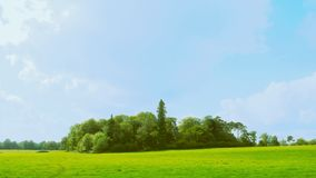 Copse of trees version 2. A view across a field to a copse of trees, with a blue sky behind.  Colourful picture stock photo