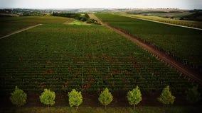 Copter_grapes_004 φιλμ μικρού μήκους