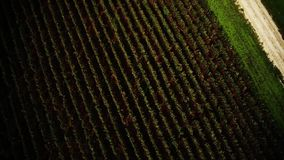 Copter_grapes_010 stock footage