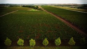Copter_grapes_004. Copter, grapes, birds eye view stock footage