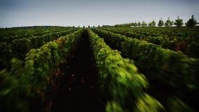 Copter winogrona zbiory