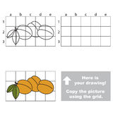 Copy the image using grid. Apricots Stock Photography