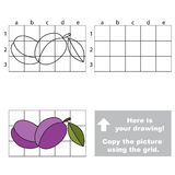 Copy the image using grid. Plums Royalty Free Stock Images