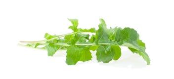 The Copy of Rugula Green Stock Photos