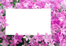 Copy space in flowers Royalty Free Stock Photos