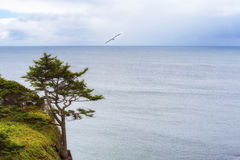 Copy-space of lone tree on cliff Stock Photography