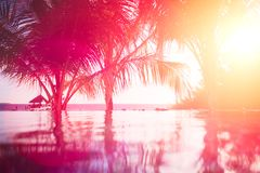 Copy space of silhouette tropical palm tree with sun light on sunset sky and cloud abstract background. Summer vacation and nature Stock Photos