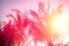 Copy space of silhouette tropical palm tree with sun light on sunset sky and cloud abstract background. Summer vacation and nature Royalty Free Stock Image