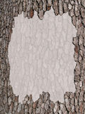 Copy Space With a Tree Bark Border Stock Photo