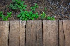 Copyspace деревянный пол и маленькие зеленые растения и утесы Стоковая Фотография RF