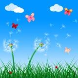 Copyspace蝴蝶表明植物群花和空白 免版税库存图片