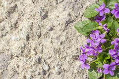 Copyspace background texture lilac flowers on stone stock images