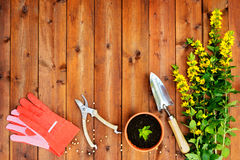 Copyspace frame with gardening tools and objects on old wooden background Stock Images