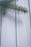 Copyspace image branch of pinetree on old white painted wooden b Royalty Free Stock Photos