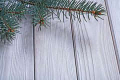 Copyspace image branch of pinetree on old white painted wooden b. Oards close up horizontal version Stock Photos