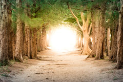Copyspace photo show pathway to business success and total freed Royalty Free Stock Photography