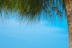 Copyspace, pini che incorniciano il cielo blu Immagini Stock Libere da Diritti
