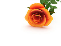 Copyspace Rose Represents Copy-Space Petal And Valentines Stock Photography