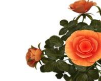 Copyspace rosor föreställer Flora Romance And Bloom Arkivbild
