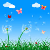 Copyspace-Schmetterlinge zeigt Flora Flower And Blank an Lizenzfreies Stockbild
