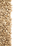 Copyspace sunflower seeds composition Royalty Free Stock Photography