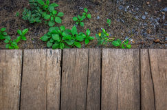Copyspace the wooden floor and a little green plants and rocks Royalty Free Stock Photography