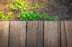 Copyspace the wooden floor and a little green plants and rocks w Stock Photography