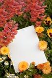 copyspaceblommor Royaltyfria Bilder