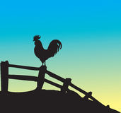 Coq illustration stock