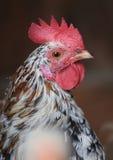 Coq Image libre de droits