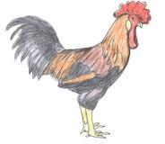Coq, animal de ferme, croquis Photo libre de droits