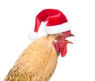 Coq dans le chapeau rouge de Santa - un symbole de la nouvelle année chinoise 2017 Images libres de droits