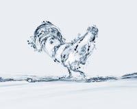 Coq de l'eau Image libre de droits