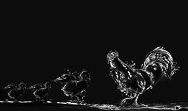 Coq et poussins noirs de l'eau Image libre de droits