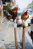 Coq nain ou poulet sur le jardin Image libre de droits